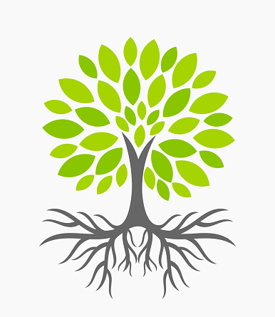 Plant Root Clipart.