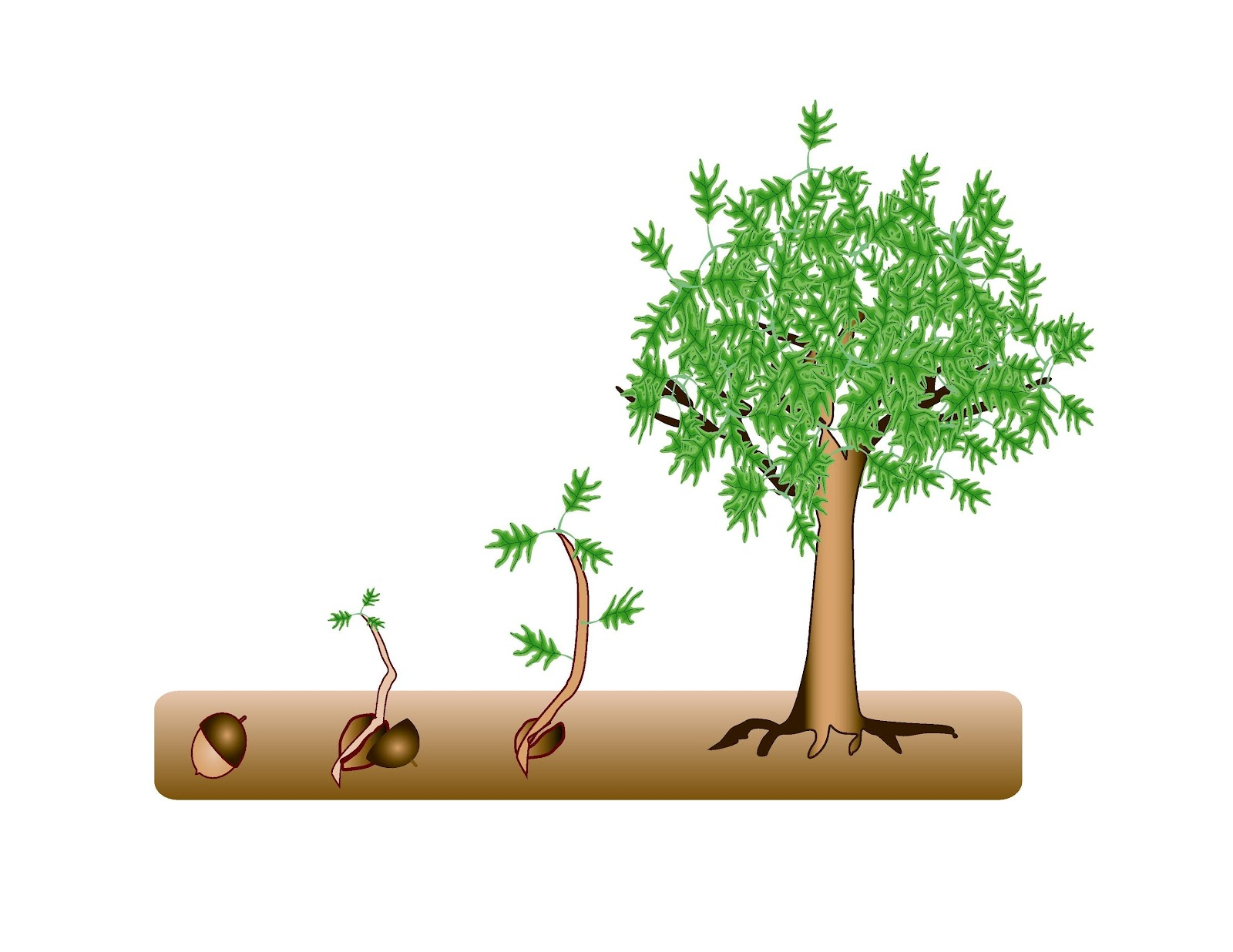 Seed Clipart Tree.