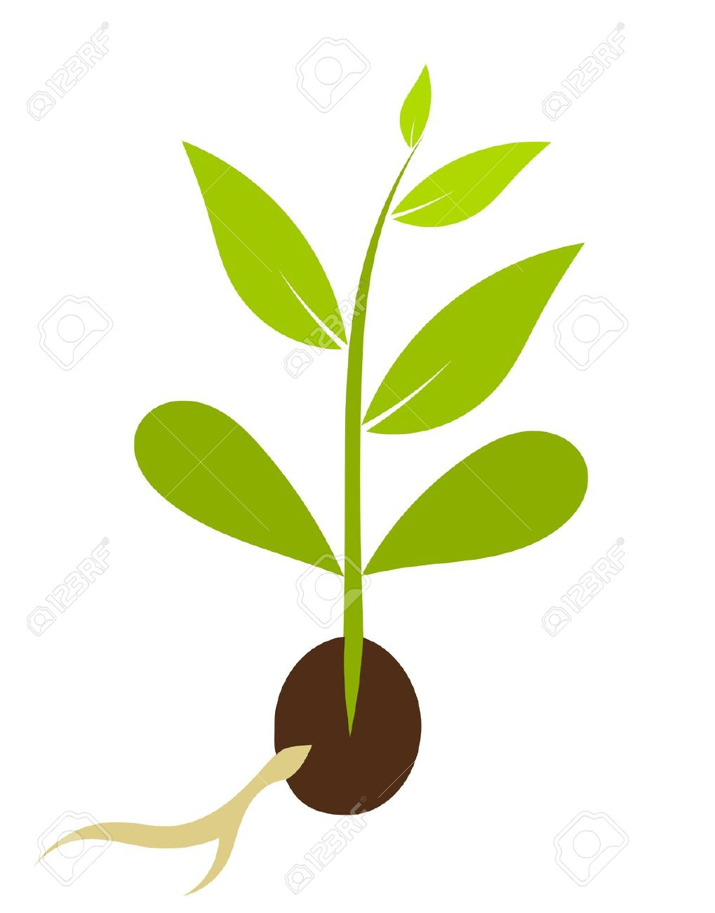 Tree seeds clipart - Clipground