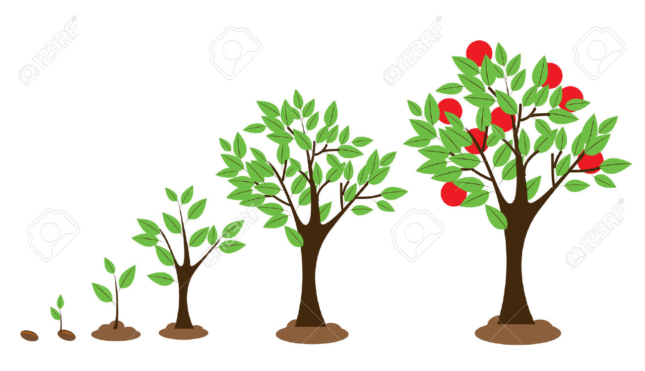 Tree clipart seeds.