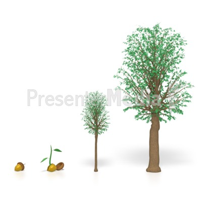 Tree Seed Clipart.