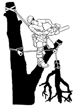Tree service clipart 3 » Clipart Station.