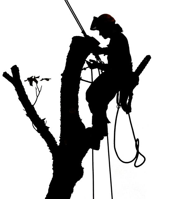 Climbers Tree Service Clipart.