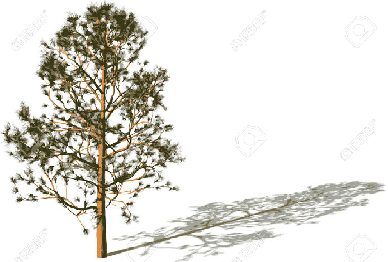 Silhouette Tree With Shadow. Royalty Free Cliparts, Vectors, And.