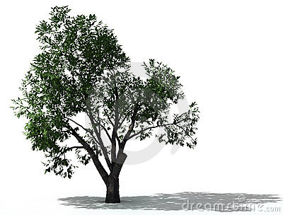 Tree and shadow clipart.