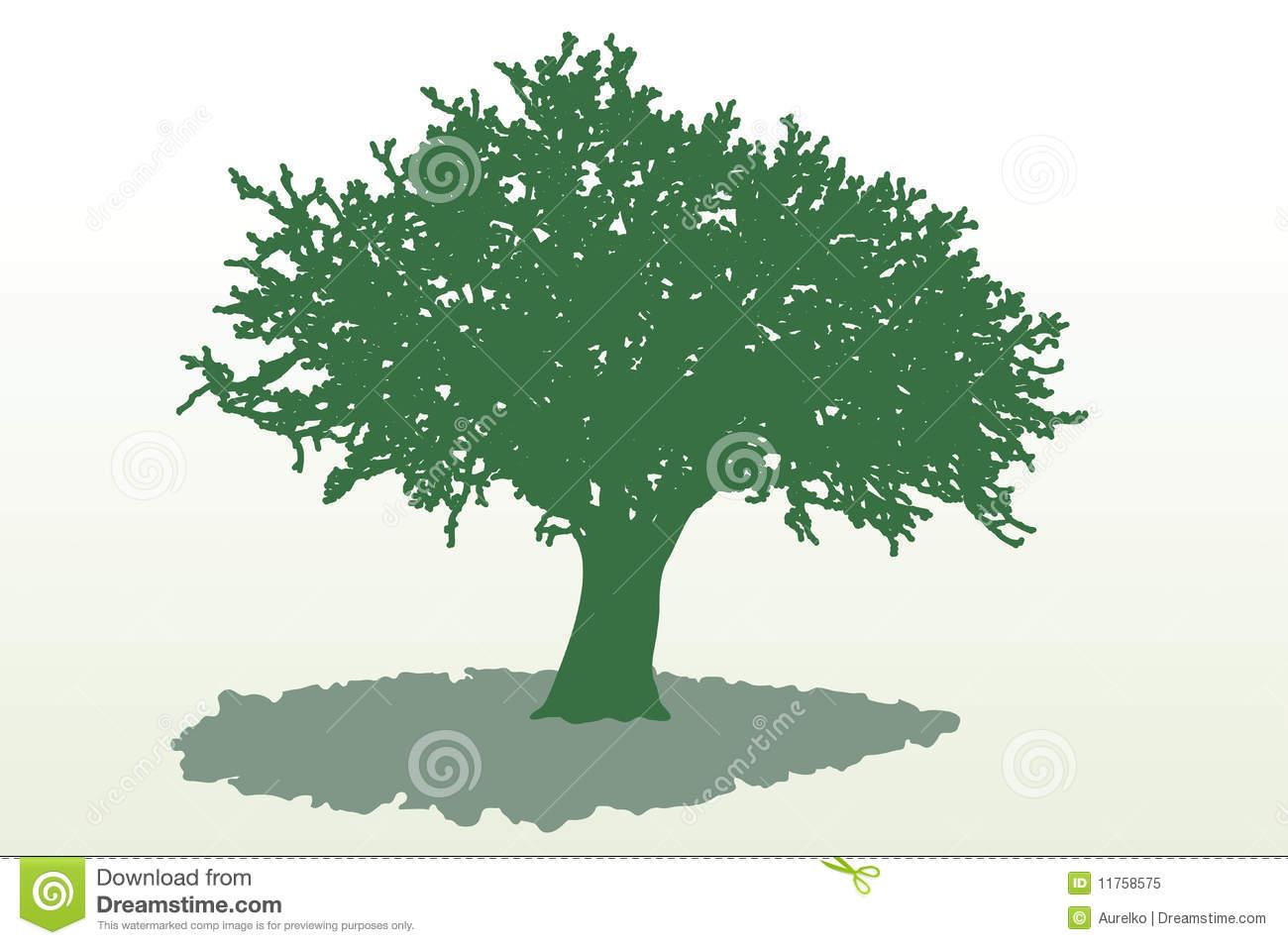 Wide Tree Shadow Royalty Free Stock Photo.