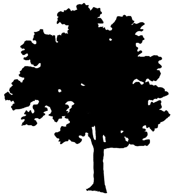 Trees Shadow Clip Art.
