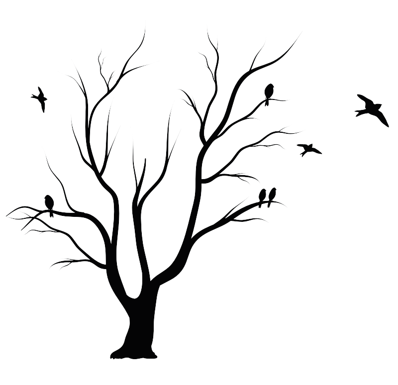 Shadow Of The Apple Tree Leaf Drawing.