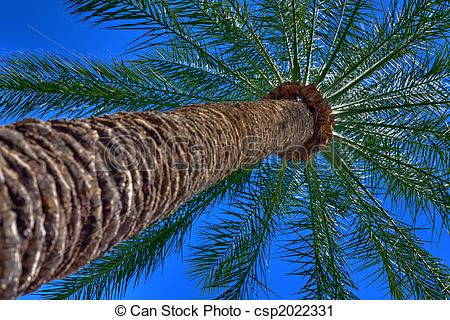Stock Photography of Palm Tree HDR Photo Perspective Shot From.