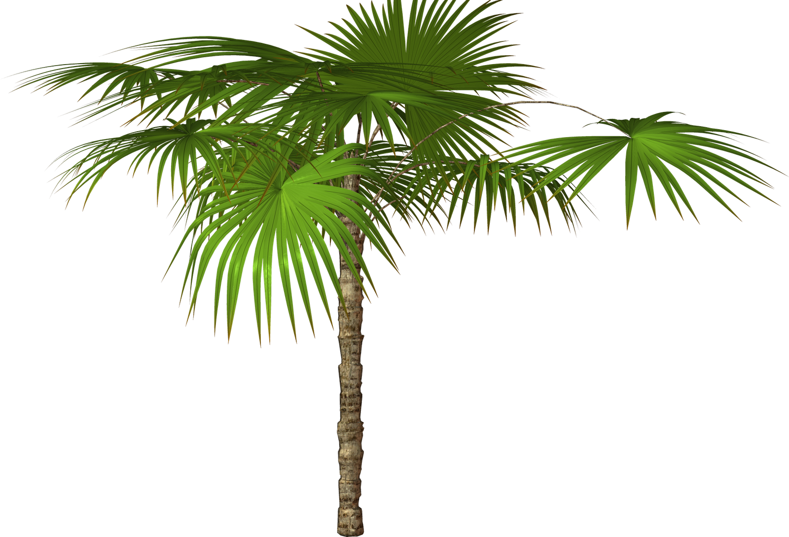 Palm flower clipart #4