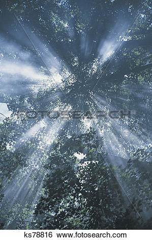Stock Images of Sun rays through tree, shot taken from ground.