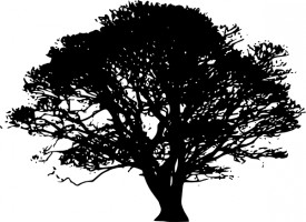 Silhouette black and white oak tree clipart.