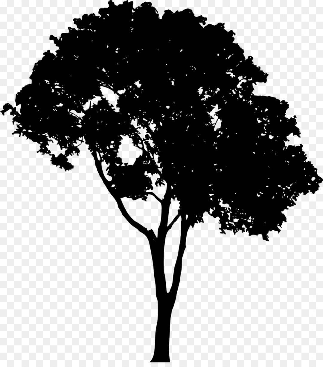 Png Tree Silhouette Clip Art Tree Vector.