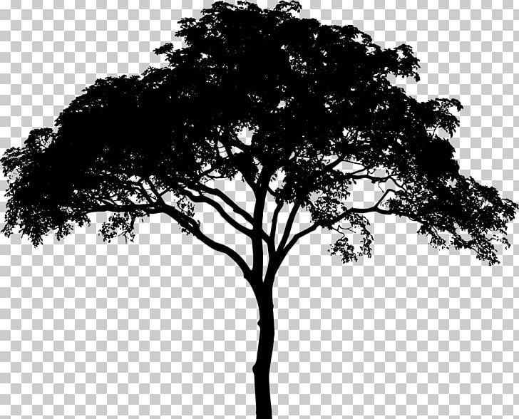 Tree Silhouette PNG, Clipart, Black And White, Branch.