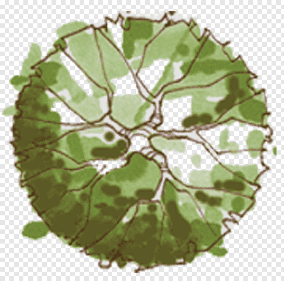Green and brown, Tree Site plan Landscape architecture, plan.
