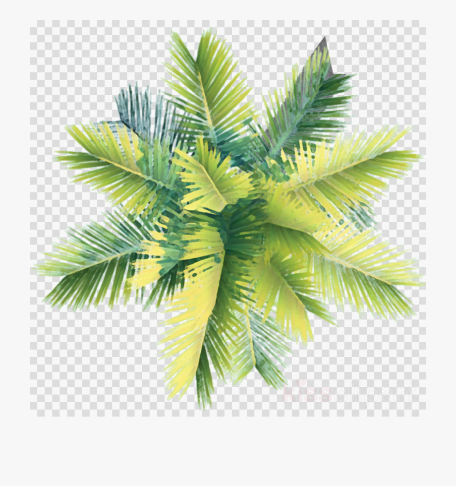 Trees Png Plan.