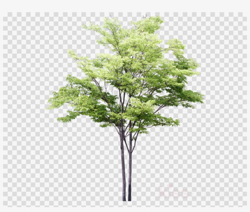 Arbre Photoshop Clipart Tree Drawing.