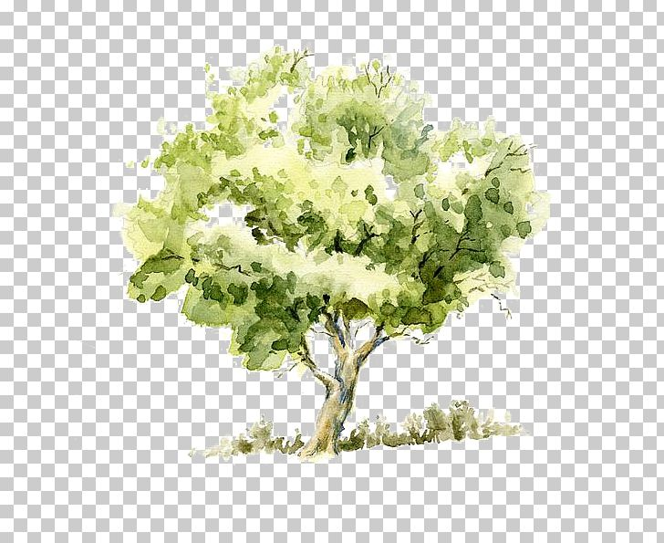 Drawing Watercolor Painting Tree Pencil Sketch PNG, Clipart.