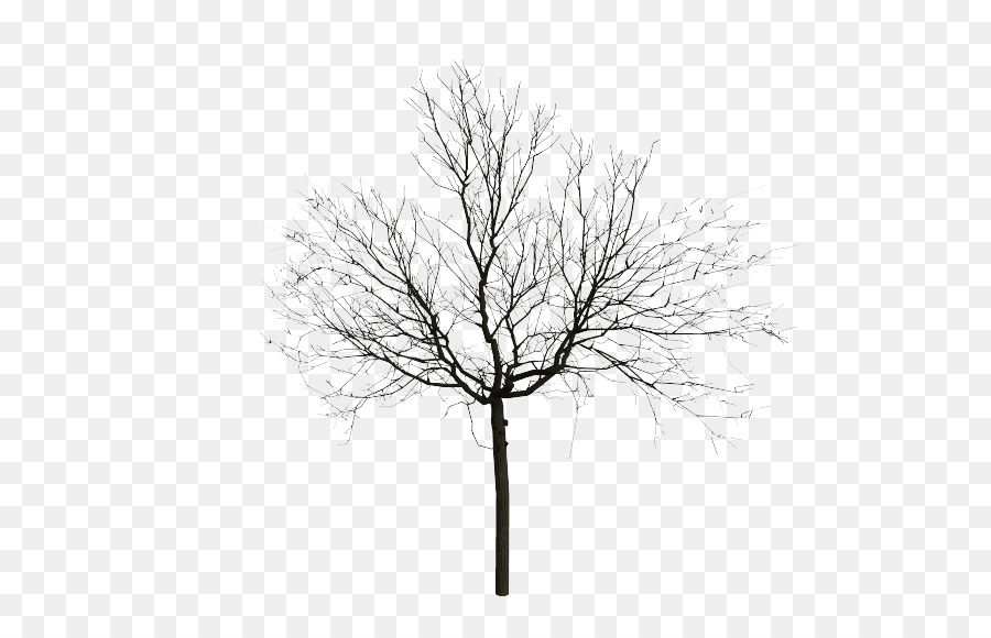 Tree Sketch Png (113+ images in Collection) Page 1.