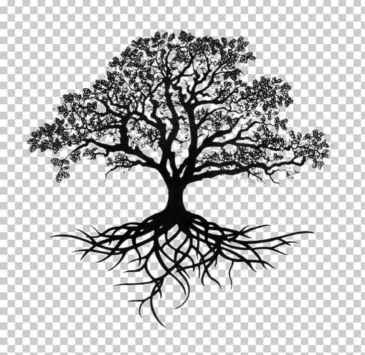 Southern Live Oak Drawing Tree Sketch PNG, Clipart, Art.