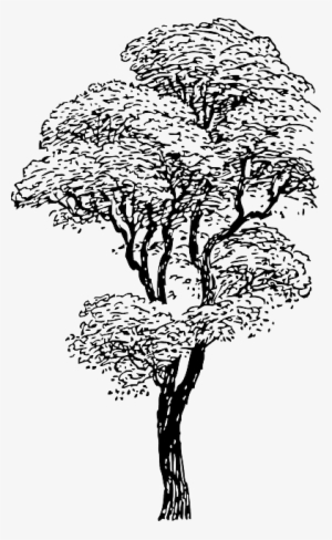 Tree Drawing PNG & Download Transparent Tree Drawing PNG.