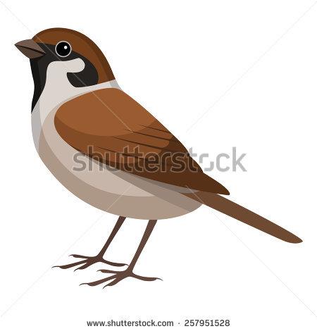 Tree Sparrow Stock Vectors, Images & Vector Art.