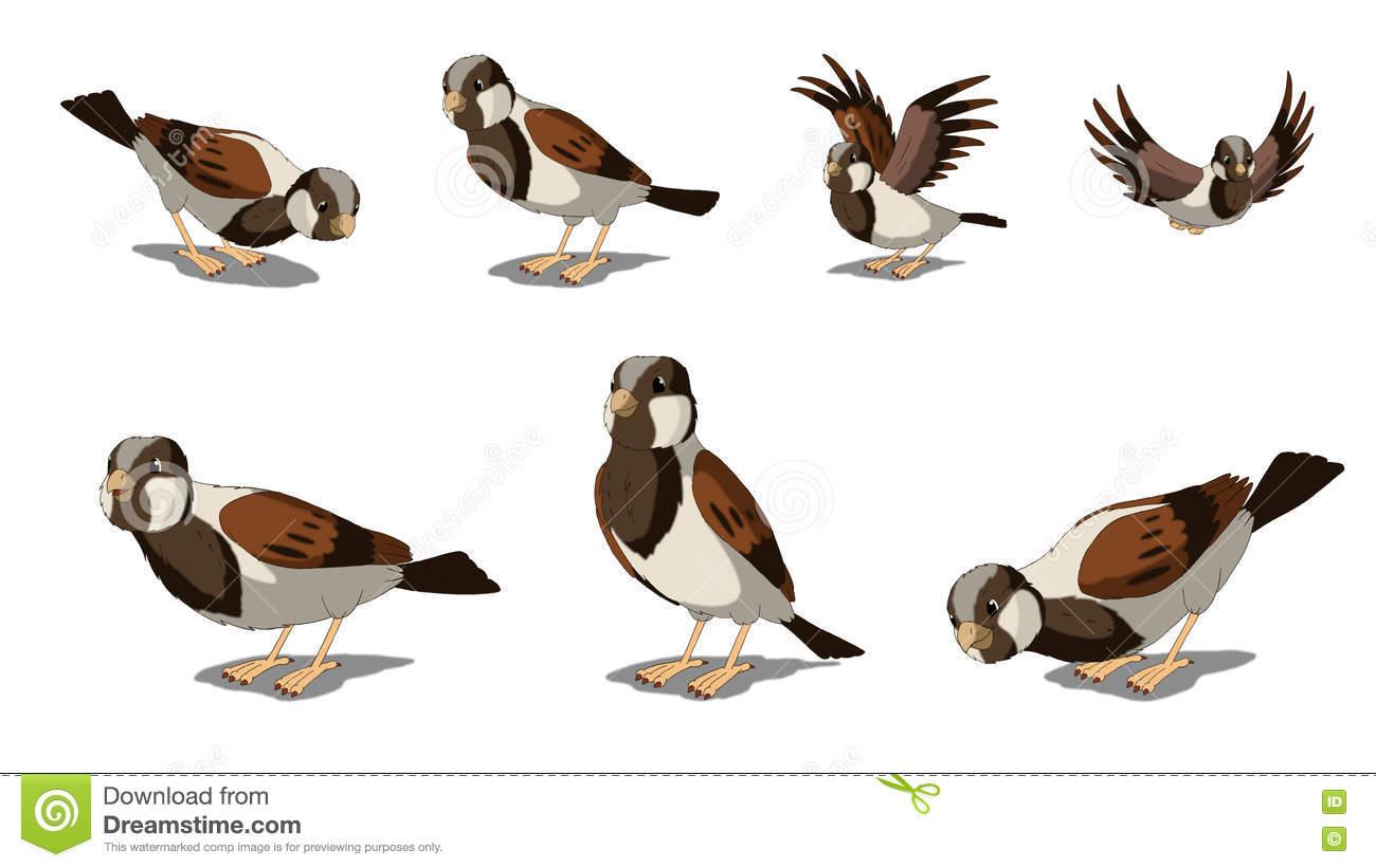 Eurasian Tree Sparrows Isolated On White Background Stock Photo.