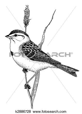 Stock Illustration of American Tree Sparrow k2886728.
