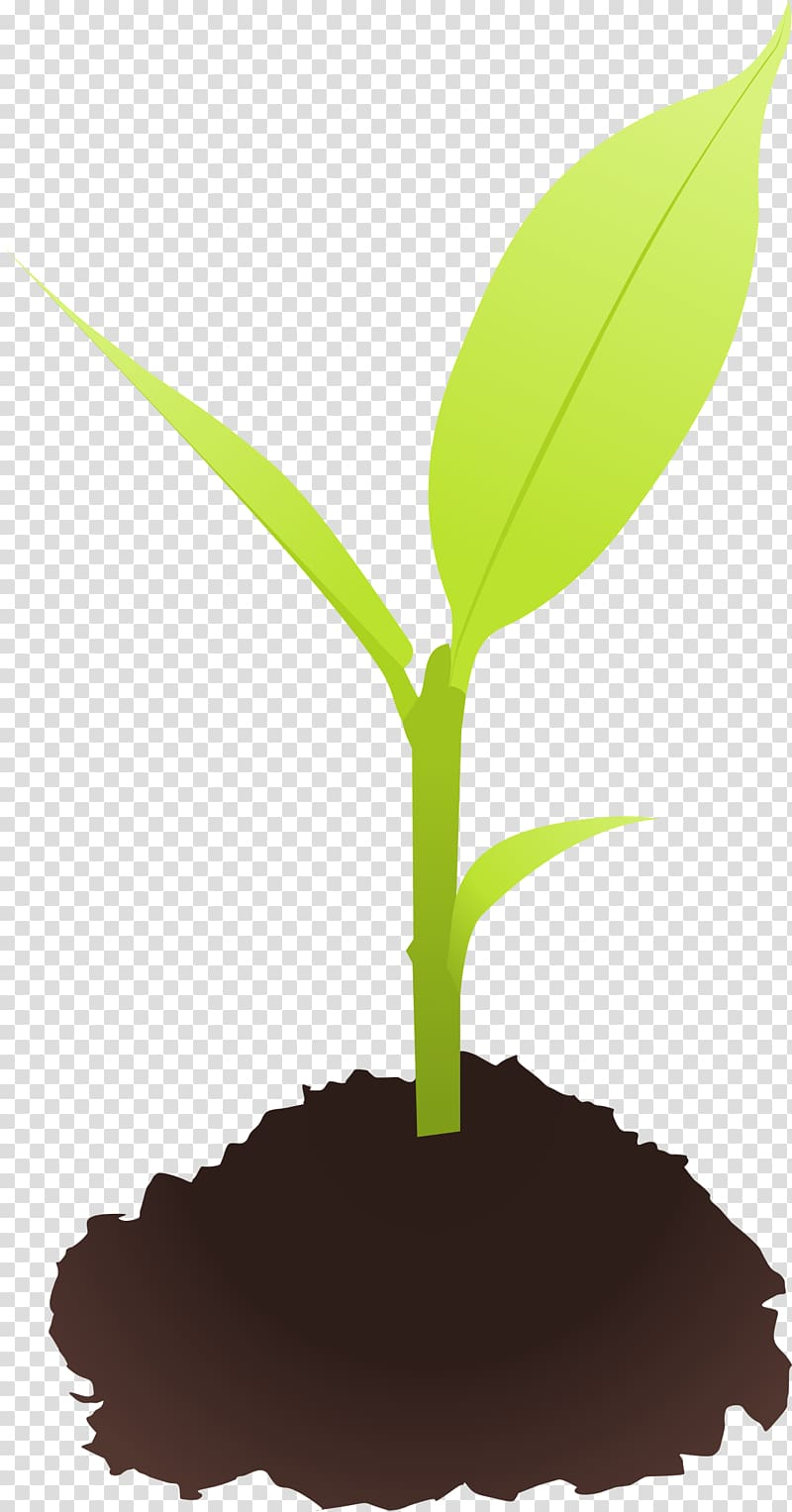 Seedling Sprouting , plant transparent background PNG.