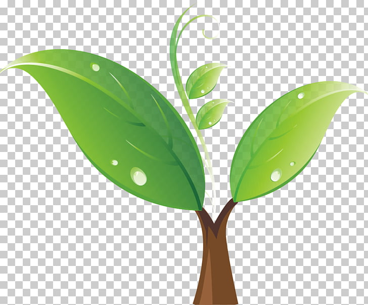 Seedling Tree , Green sprout, green leafed plant.