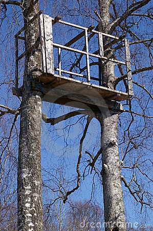 Tree Stand In Birch Trees Royalty Free Stock Images.