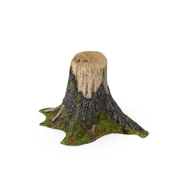 Tree Stump PNG Images & PSDs for Download.