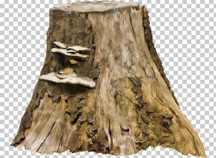 Tree Stump Photography PNG, Clipart, Albom, Ancient.
