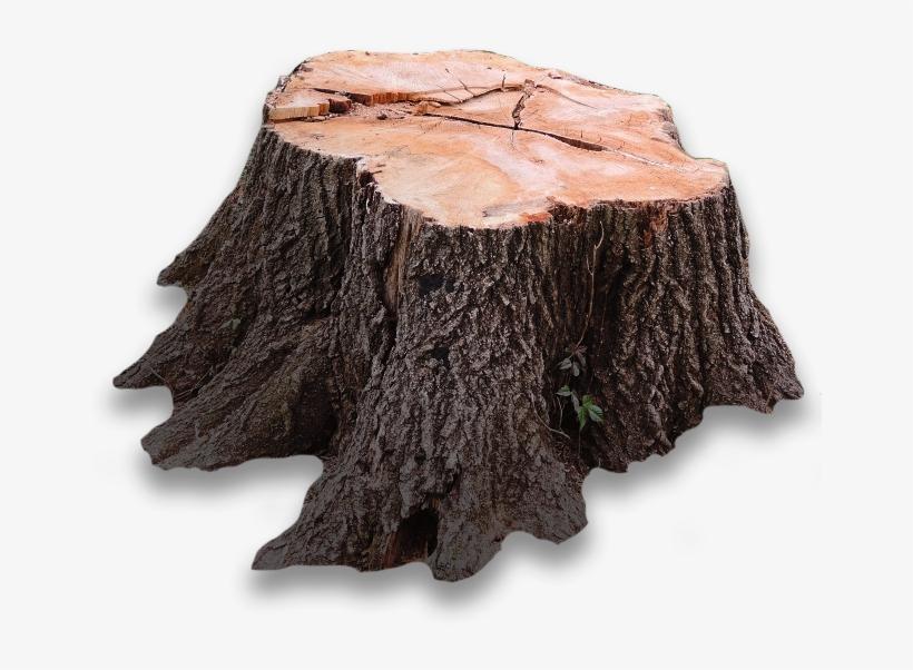 Tree Stump Transparent PNG.
