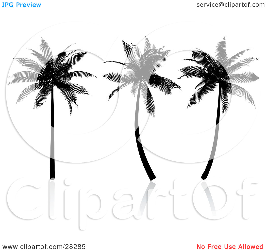 Clipart Illustration of Three Tropical Palm Trees Silhouetted In.