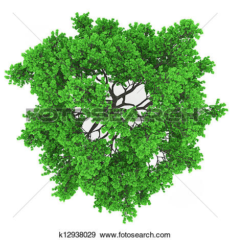 Stock Photo of tree top view k13382782.