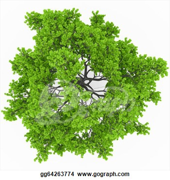 Tree Top Clipart.