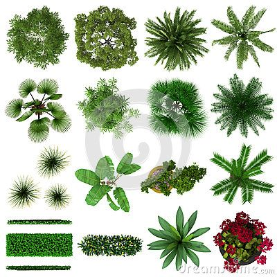 Tropical Plants Collection Top View by Dht0005, via.