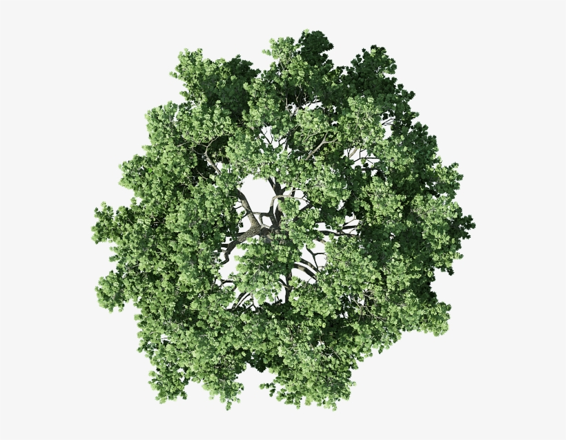 Tree Top View Png.