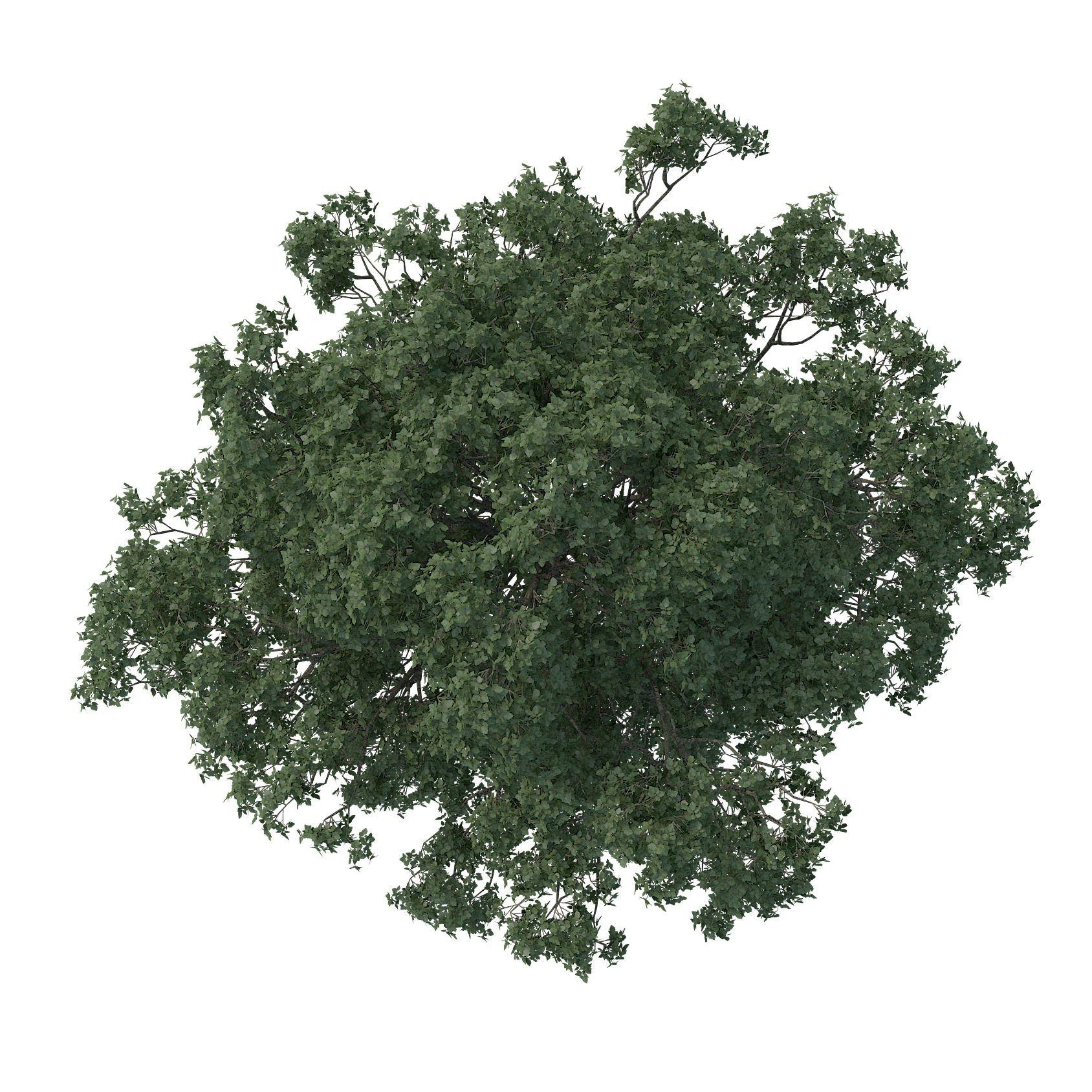 Photoshop Trees Plan Png (+).