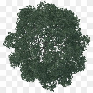 Free Tree Plan View PNG Images.