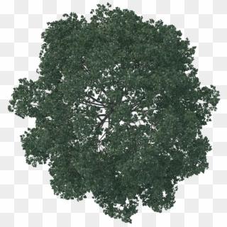 Free Tree Plan View PNG Images.