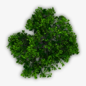 Photoshop Trees Plan Png, Transparent Png.