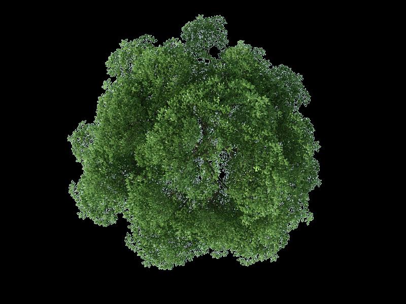 Download Tree Plan Png Free Download () png images.