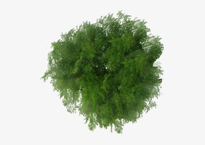 Trees Top View Png Transparent PNG.