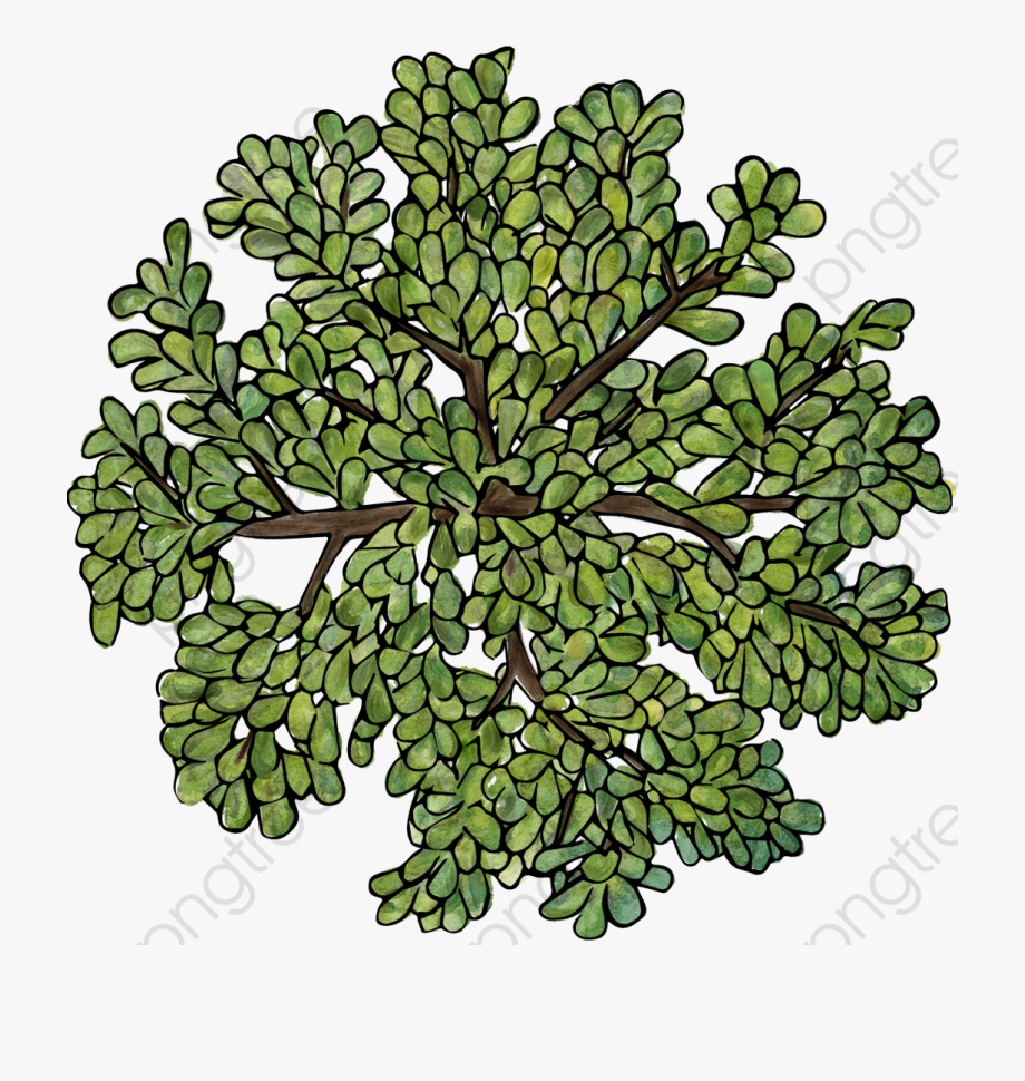 Tree Top View Png Free.