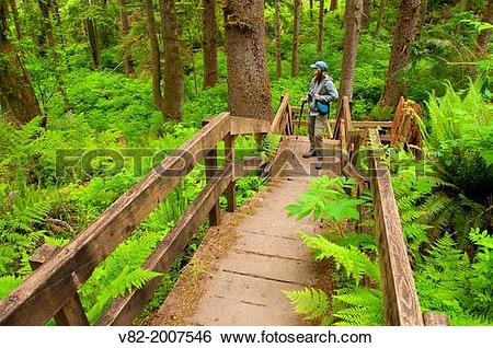 Stock Images of Cathedral Tree Trail stairway, Coxcomb Park.