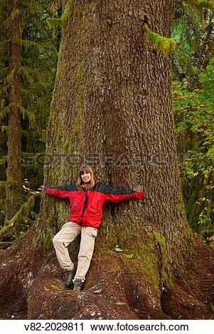Stock Photography of Sitka spruce along Big Tree Trail, Clatsop.