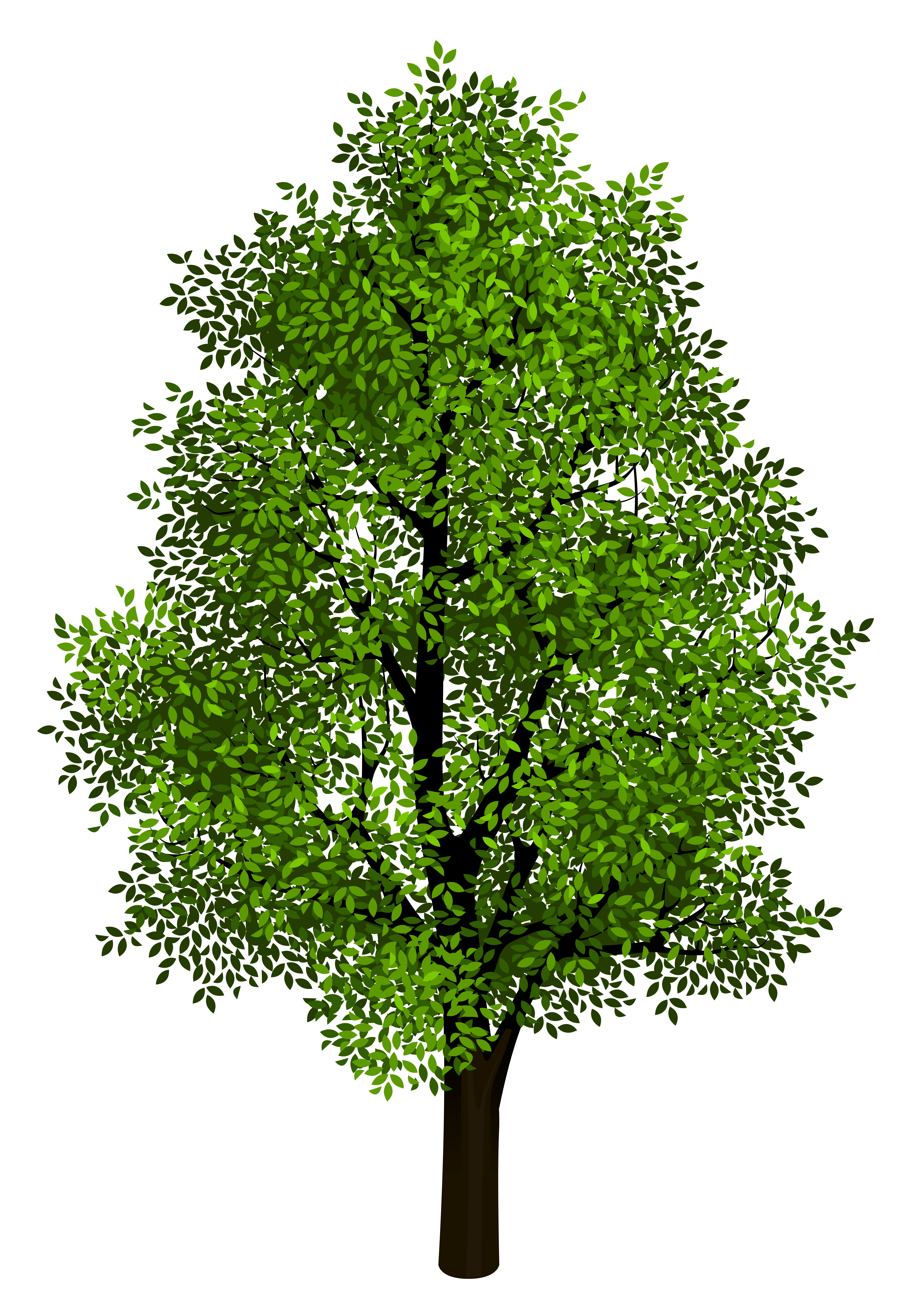 Green Tree Transparent Clipart Picture.