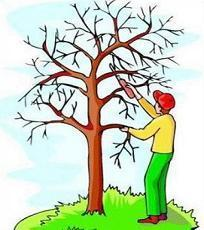 25+ Landscaping Tree Trimming Clip Art Pictures and Ideas on.
